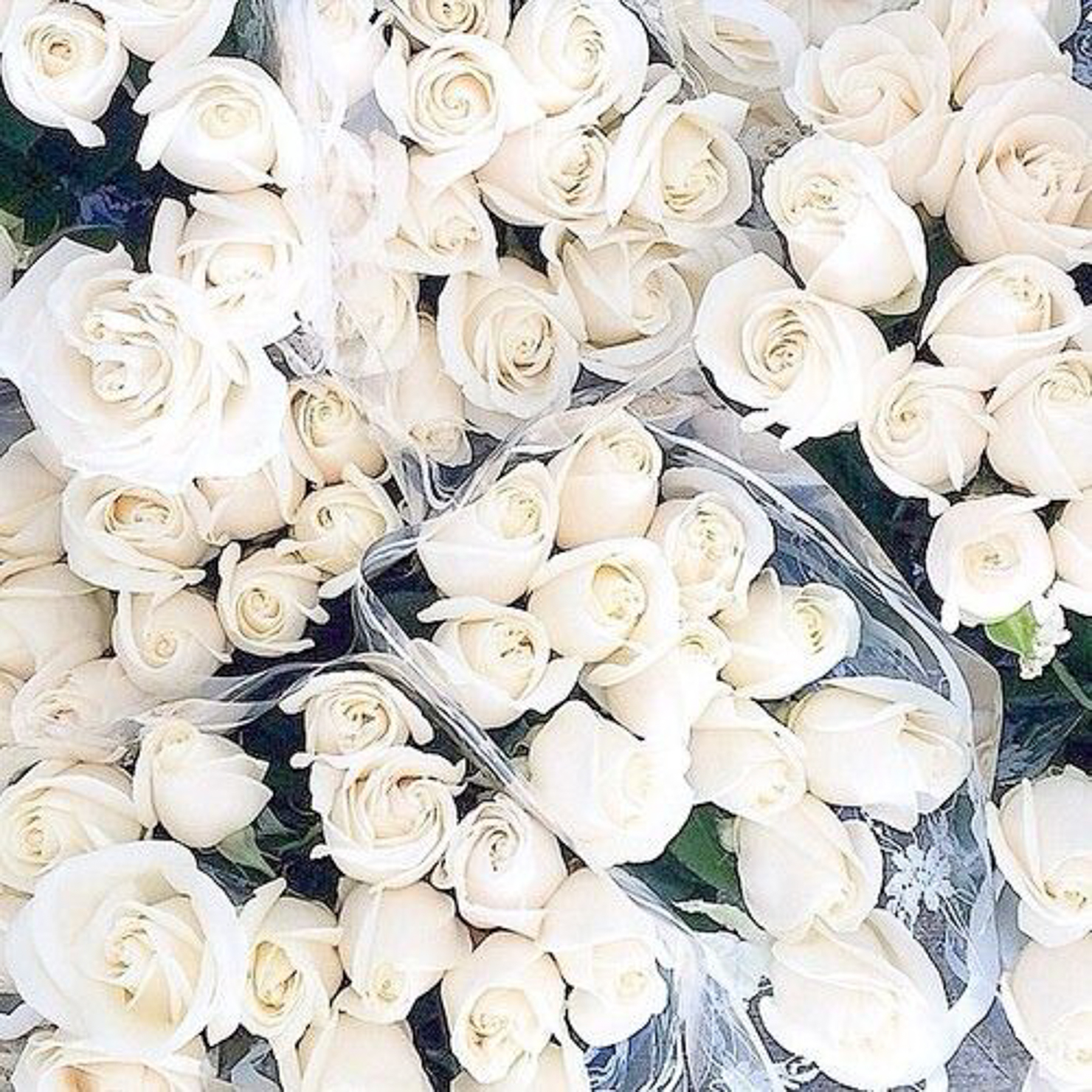 instagram-dozens-of-white-roses