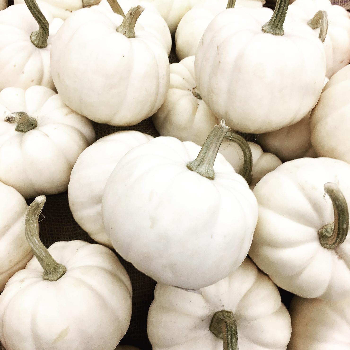 white-pumkins-october-halloween