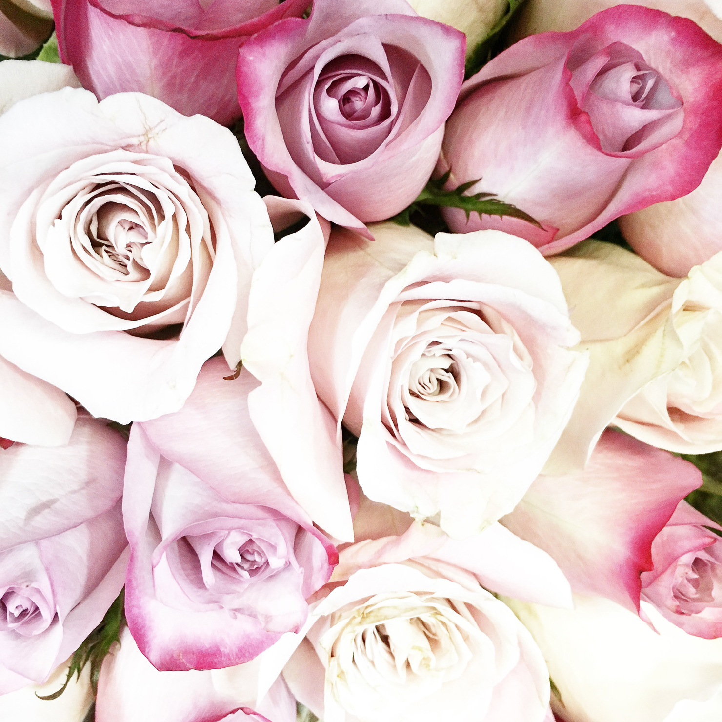 instagram-dusty-pink-roses-bouquet